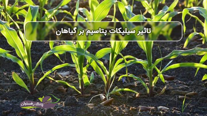 تاثیر سیلیکات پتاسیم بر گیاهان