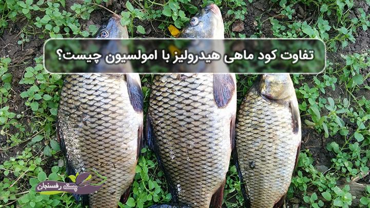 کود ماهی
