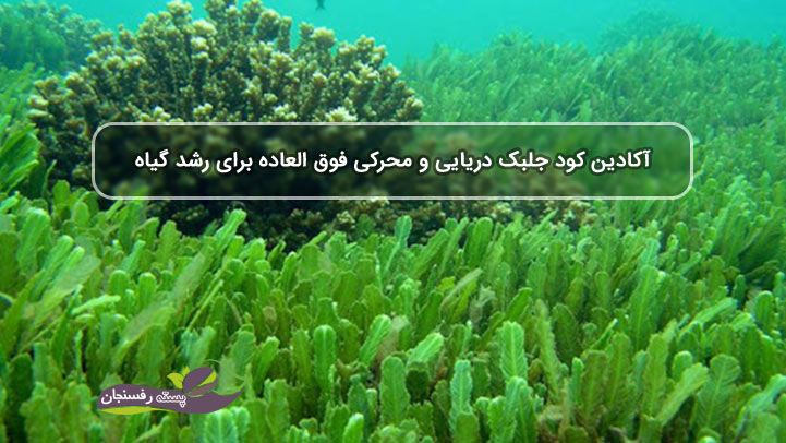 آکادین کود جلبک دریایی و محرکی فوق العاده برای رشد گیاه