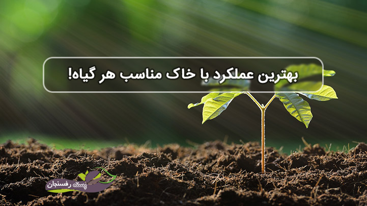 بهترین عملکرد با خاک مناسب هر گیاه!