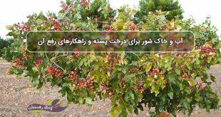 آب و خاک شور برای درخت پسته و راهکارهای رفع آن
