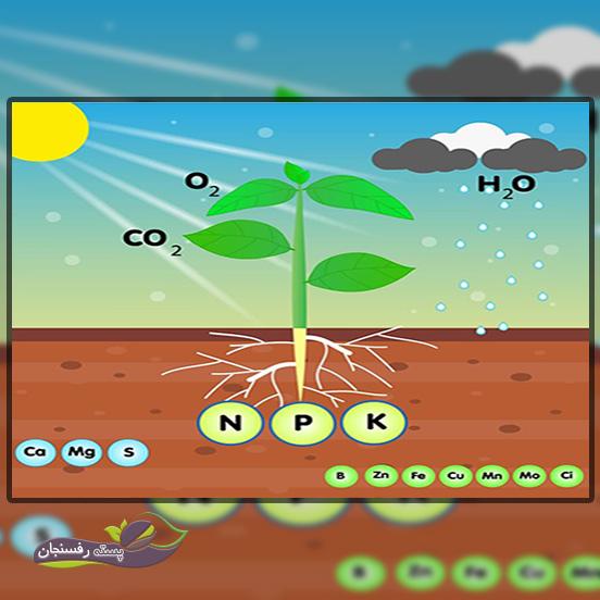 تقسیم بندی عناصر مورد نیاز گیاه