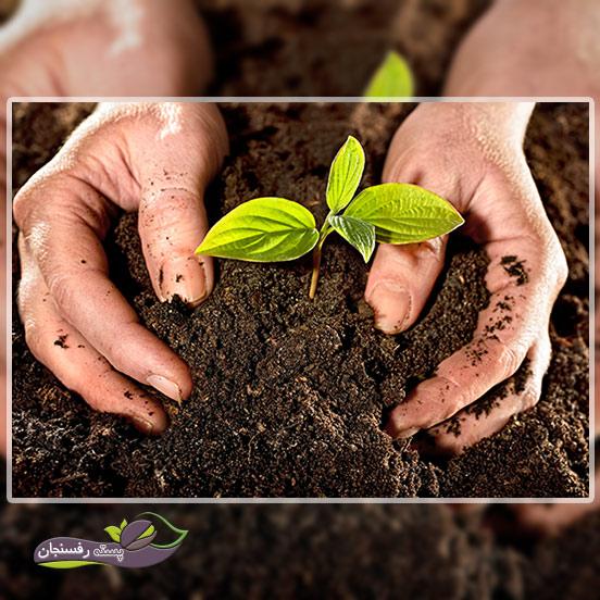 راهکارهای خانگی برای رفع کمبود عناصر در گیاهان