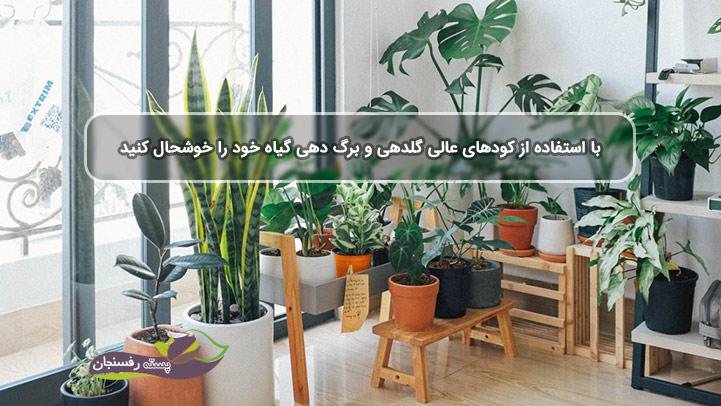با استفاده از کودهای عالی گلدهی و برگ دهی گیاه خود را خوشحال کنید