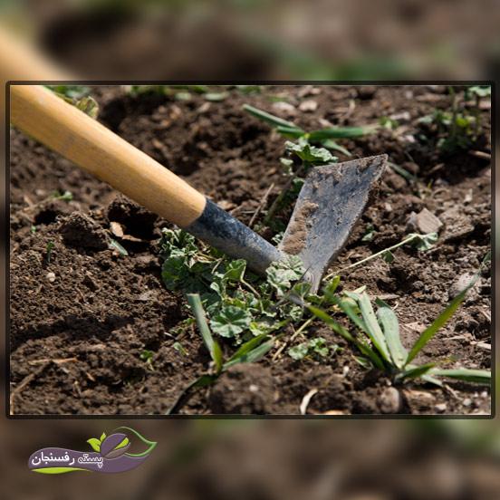 کشیدن و از بین بردن علف های هرز با ابزار آلات باغبانی