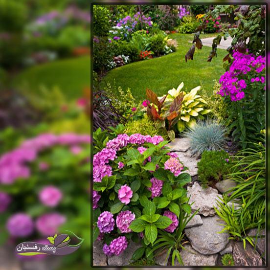 کاربرد گیاهان همیشه سبز