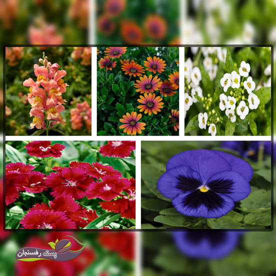 'گل های یک ساله فصل بهار،