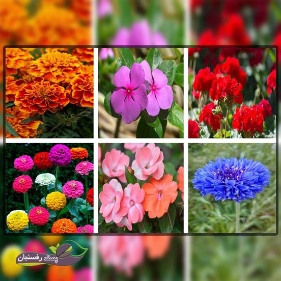 گل های یک ساله فصل تابستان،