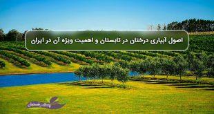 اصول آبیاری درختان در تابستان و اهمیت ویژه آن در ایران