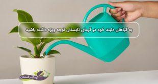 به آبیاری گیاهان دلبند خود در گرمای تابستان توجه ویژه داشته باشید