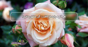 آشنایی با نحوه کاشت گل رز، نماد عشق و چشم نواز خانه شما!