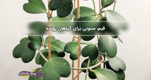 قیم برای گیاه مانند ستون برای خانه