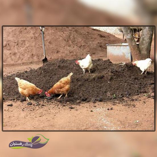 کود مایع مرغی، مناسب ترین کود دامی برای باغات ایران