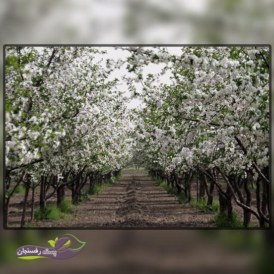 8.بررسی میوه دهی درختان