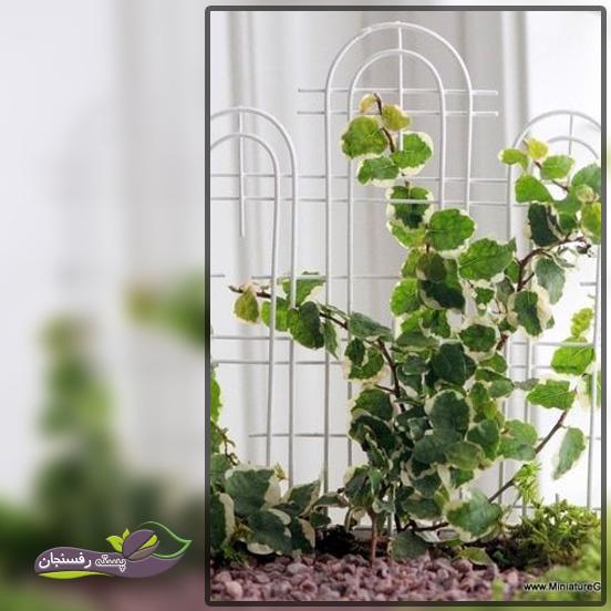 قیم گذاری برای گیاهان رونده در آپارتمان