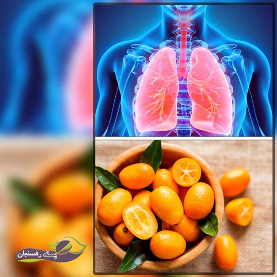 میوه کامکوات، سرشار از آنتی اکسیدان و سایر ترکیبات گیاهی