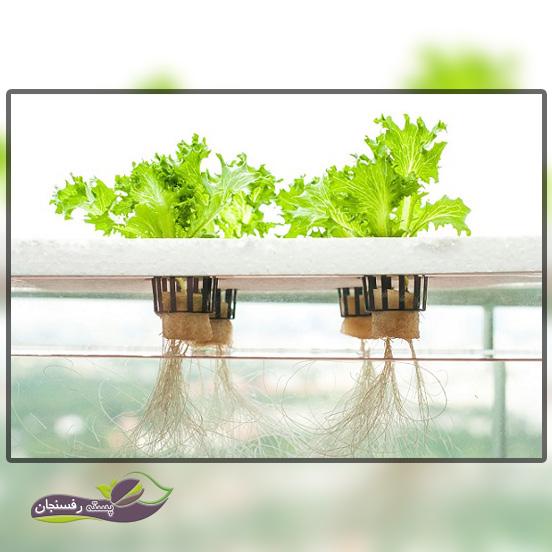 تنظیم سیستم هیدروپونیک جهت کاشت سبزیجات