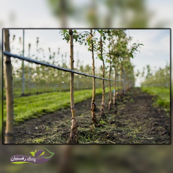 بهترین زمان آبیاری درختان در طول روز چه زمانی است؟