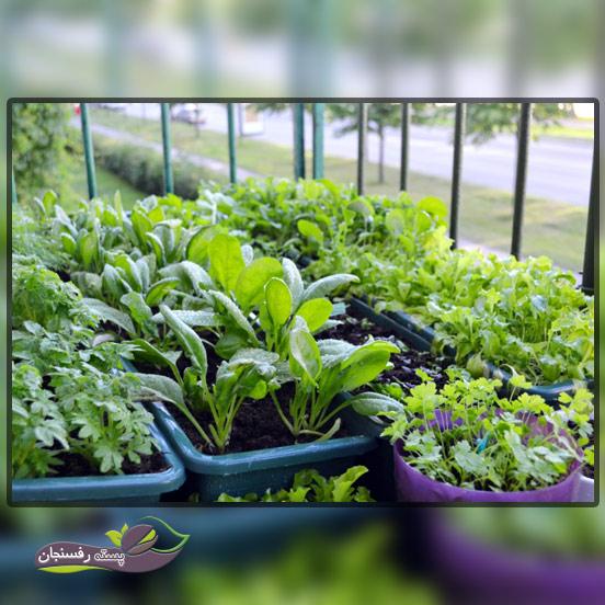 تجربه کاشت سبزیجات در آپارتمان