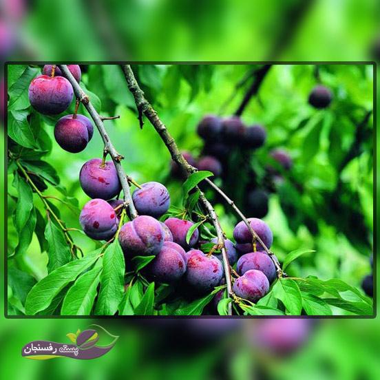 4.بررسی تربیت و هرس درختان