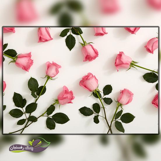 کاشت گل رز در منزل