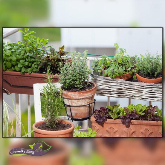 کاشت سبزیجات در آپارتمان بدون خاک