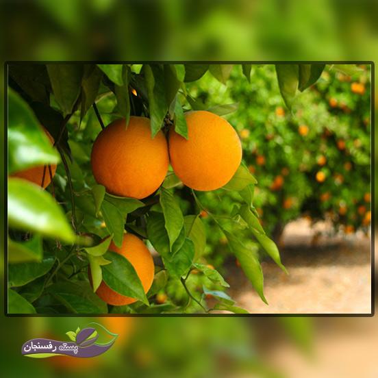 کنترل ریزش میوه درخت چگونه صورت می پذیرد؟