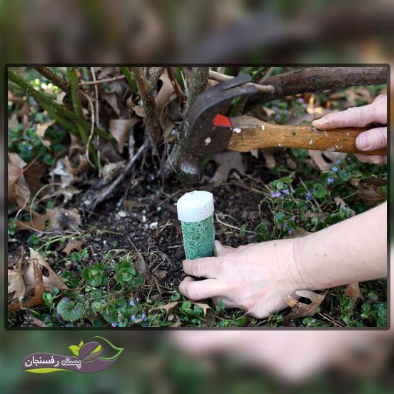 زمان مصرف و روش استفاده از کود برای درختان میوه
