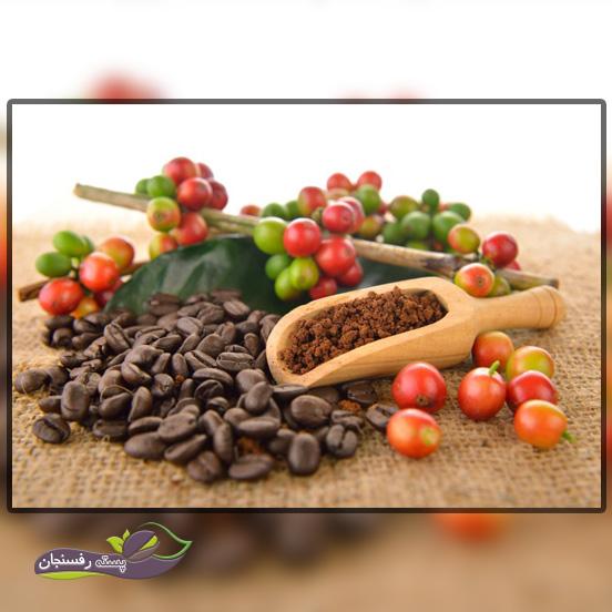 مشخصات گیاهشناسیقهوه