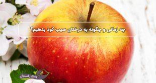 بهترین کود برای درخت سیب