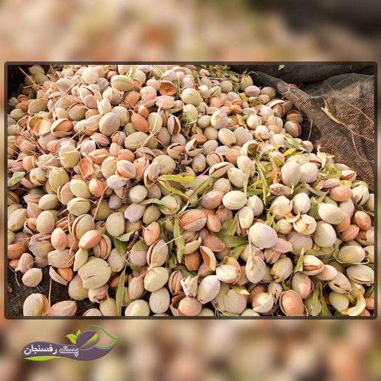 مندورلا دی توریتو (Mandorla di Toritto)، بهترین نوع بادام درختی در مقاومت