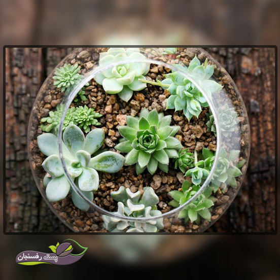 طرز قرار گیری گیاهان در تراریوم