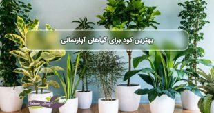 بهترین کود برای گیاهان آپارتمانی