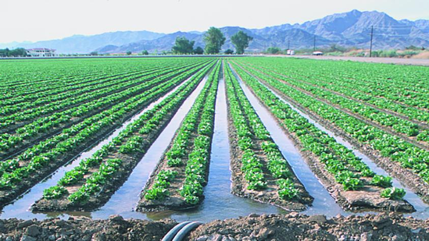 les m thodes d 39 irrigation dans l 39 agriculture l 39 irrigation de surface et l 39 irrigation par. Black Bedroom Furniture Sets. Home Design Ideas