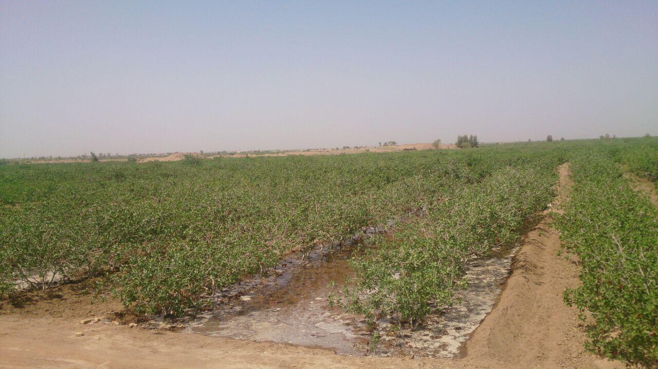 مصرف گچ در کشاورزی