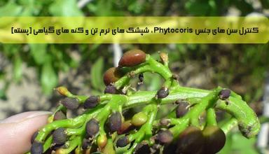 کنترل سن های جنس Phytocoris ، شپشک های نرم تن و کنه های گیاهی (پسته)