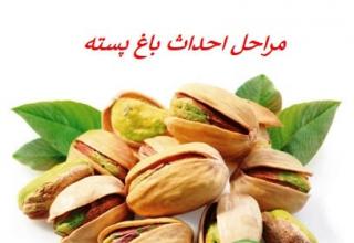 The pistachio orchard