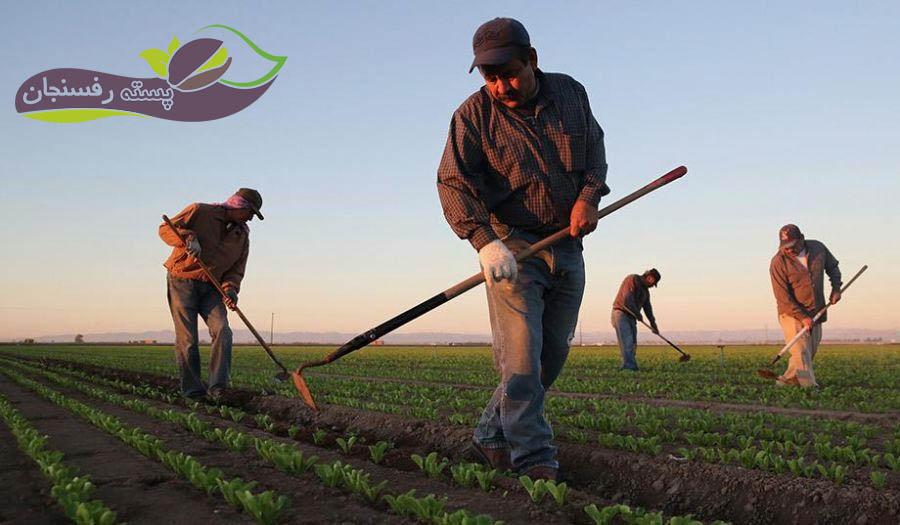 نیروی کارگر کشاورزی