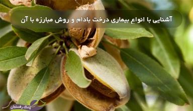 بیماری درخت بادام