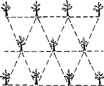 سیستم مثلثی کاشت پسته