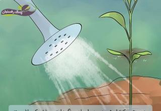 مدیریت و کنترل شوری، در ایجاد و نگهداری موفق یک باغ پسته