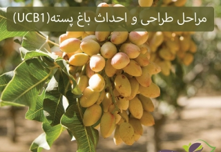 The design and construction of pistachio orchards(UCB1