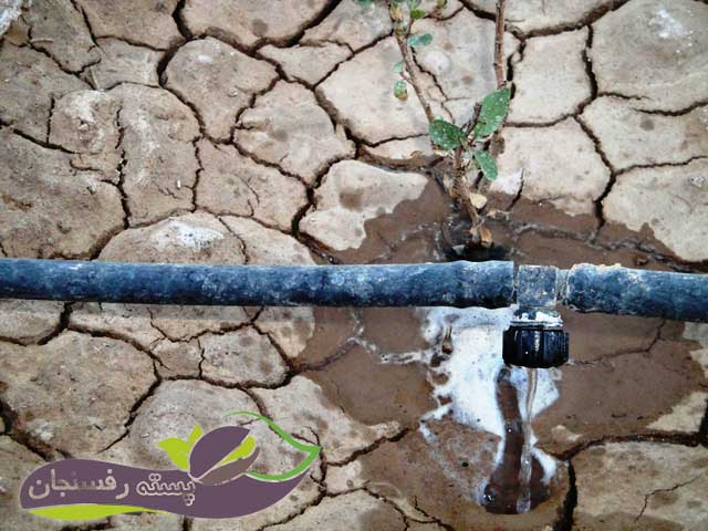 تزریق اسید در آب آبیاری