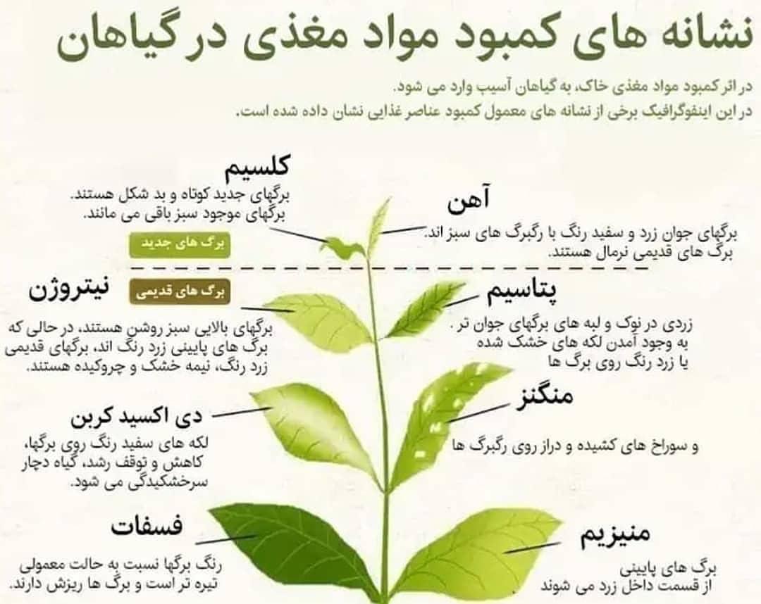 کمبود مواد غذایی در درختان