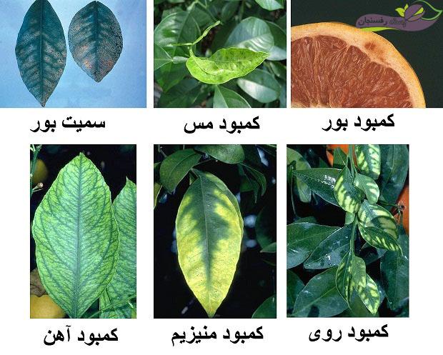 کمبود عناصر غذایی در درختان
