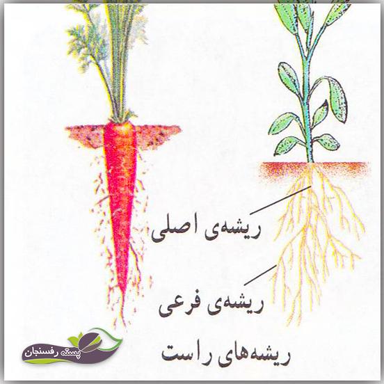 انواع ریشه های گیاهان