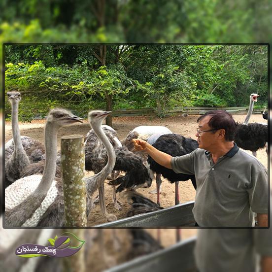 قوانین پایه ای در برنامه ریزی و ایجاد مزرعه شترمرغ