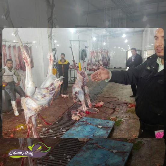 عملیات بعد از کشتار شتر مرغ
