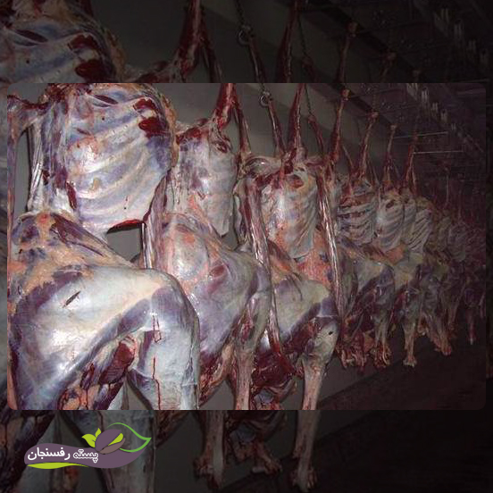 کشتار شترمرغ در کشور های مختلف