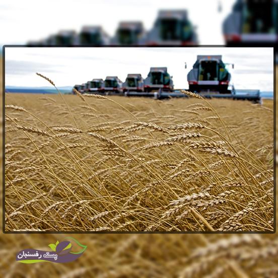 اراضی زیر کشت سالیانه گندم و جو به چه شکل است؟